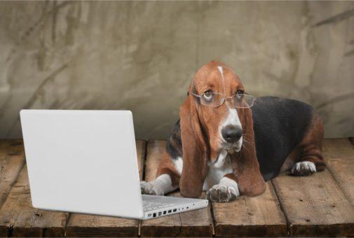 Haftplichtversicherung für Tiere