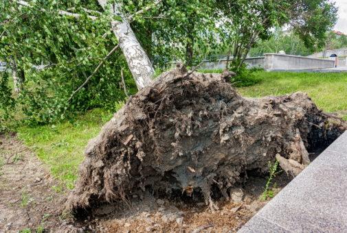 Wohngebäude-Sturmversicherung: Rettungskostenersatz für Beseitigung eines entwurzelten Baumes