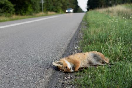 Kaskoversicherung: Ausweichmanöver wegen Fuchs - Leistungskürzung