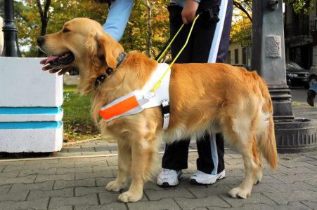 Reiserücktrittsversicherung: Reisestornierung wegen Erkrankung des benötigten Blindenhundes