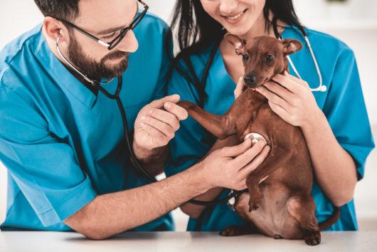 Tierhalterhaftpflichtversicherung – Umfang und Begriff des Tierhalters