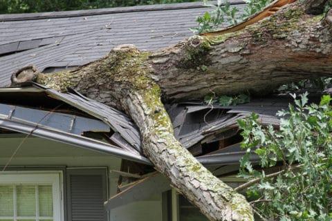 Gebäudeversicherung - Sturmschaden durch umstürzende Bäume