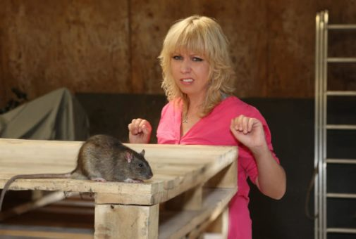 Firmensachversicherung - Entschädigungsanspruch wegen Rattenbefalls