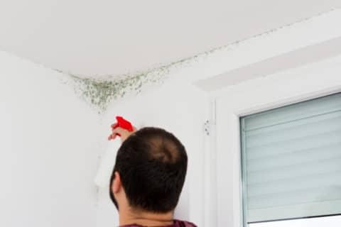 Gebäudeversicherung - Deckungsschutz für Vertragsende angelegten Schimmelbefall