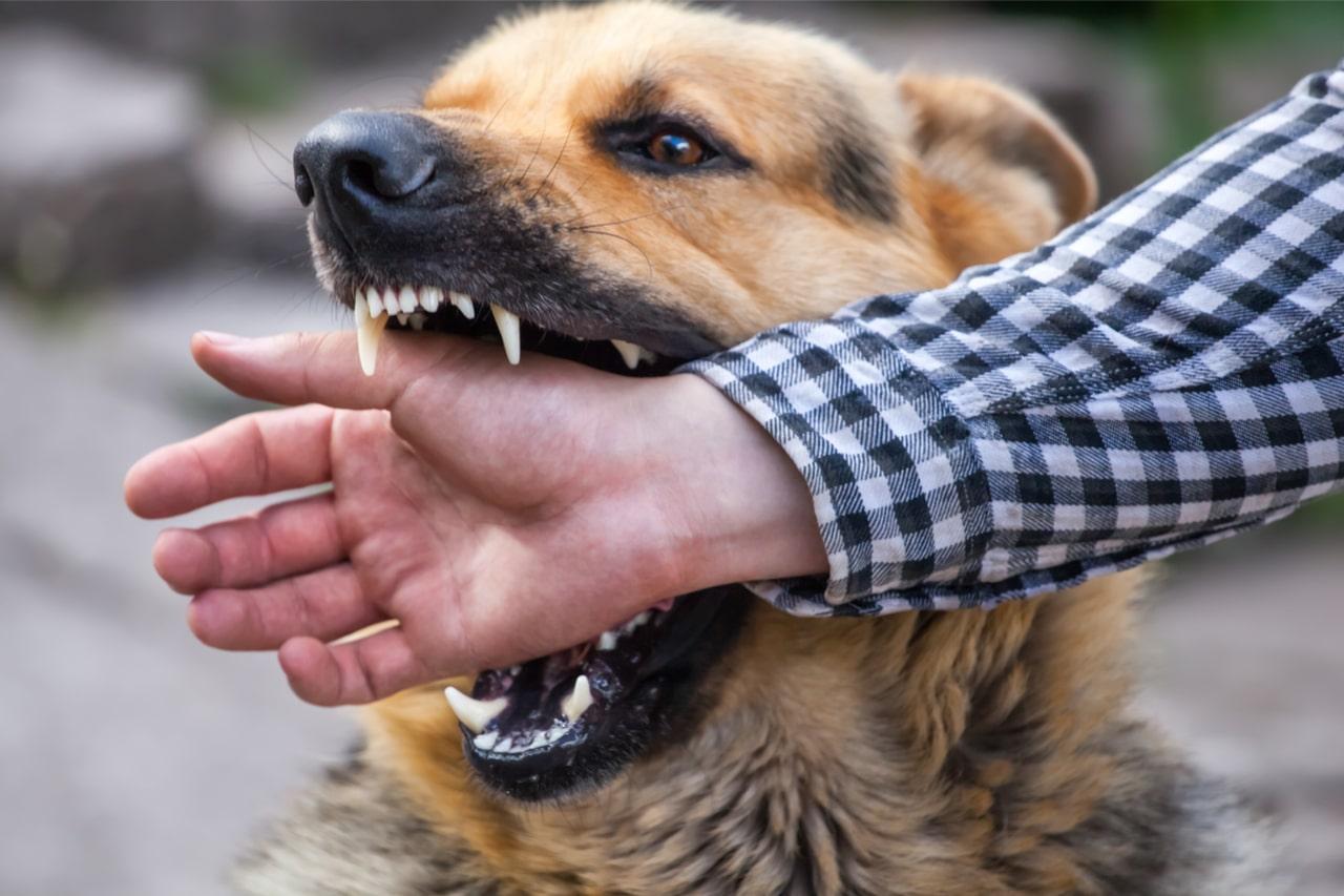 Versicherungsschutz bei einem Hundebiss
