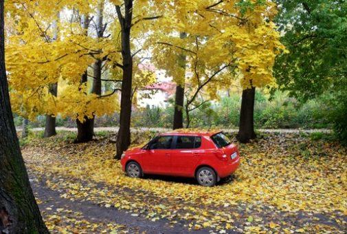 Fahrzeugbeschädigung durch herabfallende Äste und Nüsse