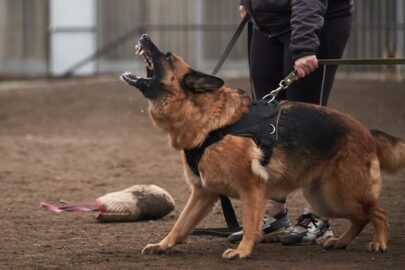 Tierhalterhaftpflichtversicherung – Ausschluss der Deckungspflicht –