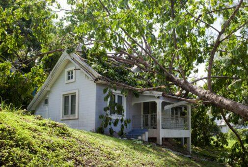 Sturmschäden: Zahlt die Versicherung die Entfernung von umgestürzten Bäumen?